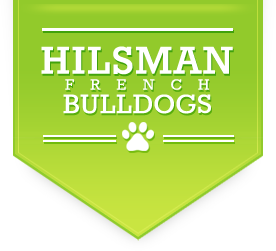 Hilsman French Bulldogs